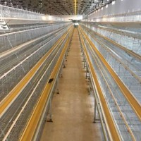 Useful Layer Chicken Poultry Equipment