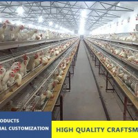 Simple Automatic Layer Chicken Equipment