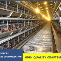 Layer Chicken Equipment In South Africa